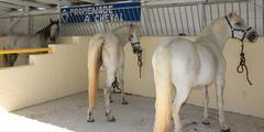 Loisirs en centre equestre - photo de Saint Baudile Equitation dans la ville de Fabregues (credits photos: EDV - Fabrice Chort)